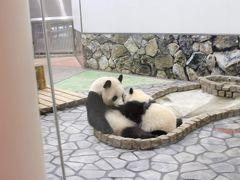 次の日、オープン前から並んで赤ちゃんパンダ「彩浜」ちゃんを見に行きました! 残念ながら授乳中で正面向いてくれませんでしたが、親子のほのぼのとした様子が伺えました。