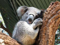 オーストラリアといえばやっぱりコアラ 1日約20時間寝るそうでほぼのコアラが寝ていました…でも稀に活発なコアラもいて可愛い💕 他のコアラの上に乗ってユーカリを食べたりとマイペース過ぎます。でもそこが可愛い❣️