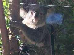 コアラと写真撮影をするなら少し高いけど私は、 ワイルド・ライフ・シドニー動物園の方が良いと思います。なぜならコアラが多いから!! 頭のすぐ上にコアラがいて触りたい気持ちが抑えられません! でも触らないように注意⚠️