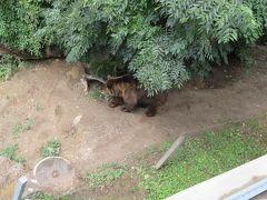 いたー!熊だ熊!