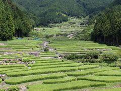 11:55 四谷の千枚田 日本の棚田100選 棚田が段々になっていて本当にきれい。