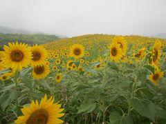 1日目は喜多方市からスタート。出だしから生憎の雨模様だけど この時期、喜多方市北部にある三の倉高原では満開のヒマワリが見れる。