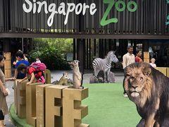 シンガポール動物園。  ここへは、Grabを使って移動。 シンガポールはタクシー代が日本より安いし Grabは結構便利に使えました。