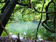 じゃじゃん♪ こちらが『丸池様』 直径20メートル、水深5メートル、鳥海山から湧き出る湧水だけで満たされた池なんですって(。゚ω゚) 湧水だけ...すごい