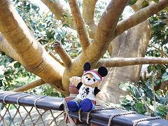 久々にスイスファミリーツリーハウスで、ちょっとまったりしてみました。木陰があっていいですよ。