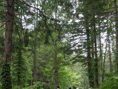 帰りは違う道を、ということで、森の中を歩いて帰ります。