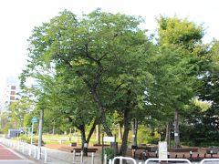 高浜運河沿いに緑の多い港南公園があります。