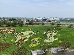 田舎館村 第2田んぼアート  展望台からの眺め
