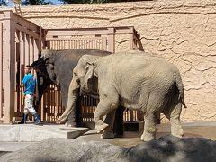 入ってすぐのところにいた、象さん。 餌をやれるのか、子供たちが行列していました。 落とし物の匂いが、何となく、アユタヤを思い出させます。
