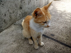 やっと湯島についたー!!! 早々におネコ様発見