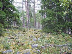 朝早く目が覚めたので、7歳男子と一緒にホテルの近くを散歩。 裏山の見晴台を目指します。 ベリーの生えた北欧らしい森を抜けて歩きます。