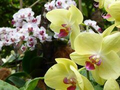 最後はシンガポール植物園&国立蘭園へ。 色鮮やかな花々を見ながら散策しました。