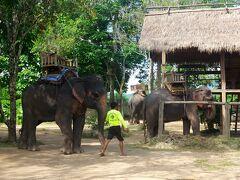 そして更に15~20分ほど走行を続けた先に、いるではありませんか!象さんたちが!!  ワクワクしながら車を降りると、これまた特に説明もなく促されるままに象の背中に乗せられた私たち。 ベルトコンベア式に、次々と他のツアー客も有無を言わさず乗せられていきます。