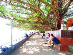 ガジュマルの樹の下をトコトコ歩いて行き……
