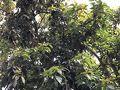 暗くて分かりにくいとは思いますが、アボガドの木です。勝手にとっても良いのかな?