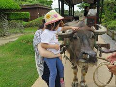 朝9時に那覇着。 レンタカーで最初に行ったのはビオスの丘。  水牛と初めて出会い娘は少し怖がりながらも触れました。 その後水牛に乗りながらゆったり園内を散歩。