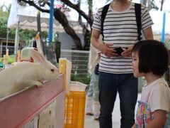 最初は「沖縄こどもの国」へ。 娘は触れ合いコーナーでウサギやモルモットを触れたのがとても楽しかった様子。 人も少なくキリンやホワイトライオンなどをじっくり観られました。