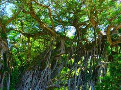 中間ガジュマルの前で記念撮影 一本の木がトンネルになっていました。