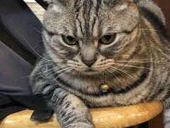 ・・・って、猫カフェなんですけどね♪ うちの主人は猫アレルギーだし、息子は小学生で入店できないので、1人の時しか入れない! 芝山駅近くの小猫花園。世界初の猫カフェなんですよね?ずーーーっと来たくてやっと来れた~o(^▽^)o  最初はこんな睨んでるのに、最後はこの子が1番モフらせてくれたかも。