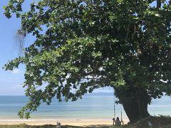 今日も快晴です。 木に括られたブランコでボーっとくつろぎます。