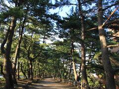 ホテルクラウンパレス北九州のすぐ隣に曲里の松並木があります。