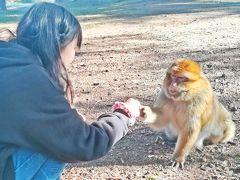 黄金色のフワフワの毛並みを持つ小柄な猿と娘。  娘は、日本語で猿と会話をしながら、そのコミュニケーションを愉しんでいた。