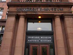 ハーバード自然史博物館。