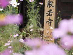 自宅近くからレンタカーで出発し、第二阪奈道路を一路東へ。 最初の訪問地は奈良市の北外れにある般若寺。コスモスの咲く寺として有名で「関西花の寺」の17番になっています。
