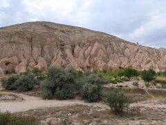 モコモコしたピンクの岩が並んでいます