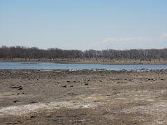 ナラワラは海水で浸食されて枯れた木群