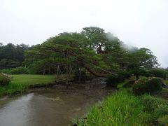 そしてこの次に兼六園…の予定だったんだケド、 ここで雨が強くなってきてしまってネ。