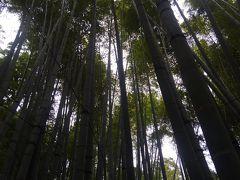 さてさて、御霊神社を後にして、江ノ電で鎌倉駅→バス→報国寺へ