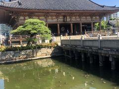 ☆亀の池☆  これでもかというくらいに亀がいます。