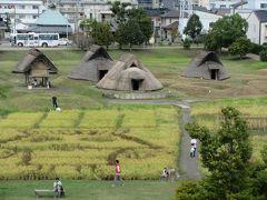 翌日、なばなの里から200㎞車を走らせ、静岡・登呂遺跡へ。 日本で初めて弥生時代の水田跡が発見された遺跡です。現在の教科書はわかりませんが、昔、小中学生のころ、教科書に載っていた歴史ある場所です。遺跡内には住居や高床倉庫、祭殿などが復元されていました。隣接する博物館には遺跡から出土した農具や木製の生活道具などが展示されていました。小中学生の頃に学んだ内容が鮮明に思い出され、私たちの祖先がどんな生活をしていたのかロマンが感じられる遺跡です。