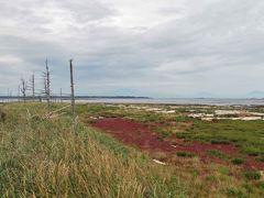 ここがトドワラです。 手前の赤いのは珊瑚草です。  かつての面影はありませんでした。 (詳細はネイチャーセンターの展示を・・)