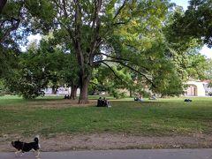 カンパ島の公園で一休み。見上げるような巨木が多いです。樹齢何年ぐらいなんだろう。