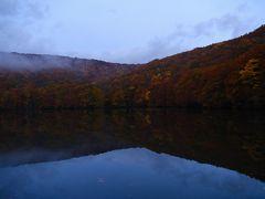 2日目の活動は朝5時からスタート! 撮影ガチ勢の夫は2時前に起きて早々にウッドデッキにスタンバイ。私は子どもたちと4時半に起きて、まだ真っ暗な中、昨日歩いた蔦の森をとおって蔦沼へ。  ここは紅葉シーズン、朝日が昇ると対岸が真っ赤に染まるのが有名で、それ狙いで未明からたくさんのカメラマンが集まってきます。日の出が6時で、5時台になると人が増えると聞いたので少し早めに行ったらこれが正解!私たちが着いたときは10~20人くらいでまだ最前列の夫の隣が空いており、そのあと10分もしたら一気に人が増えました。ラッキー!