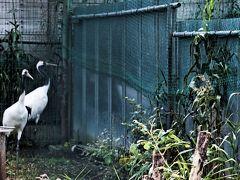鶴の舞橋 鶴が飼育されていた。