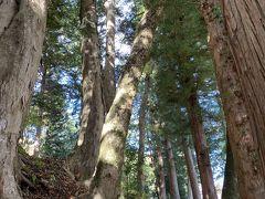 杉並木。旧中山道のこの杉並木が旧街道の面影をよく伝えられている。