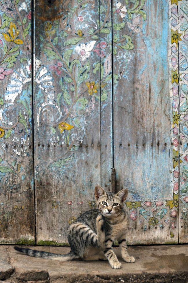 アンダルシアンガーデンズには猫が多く、ここもフォトジェニックです。