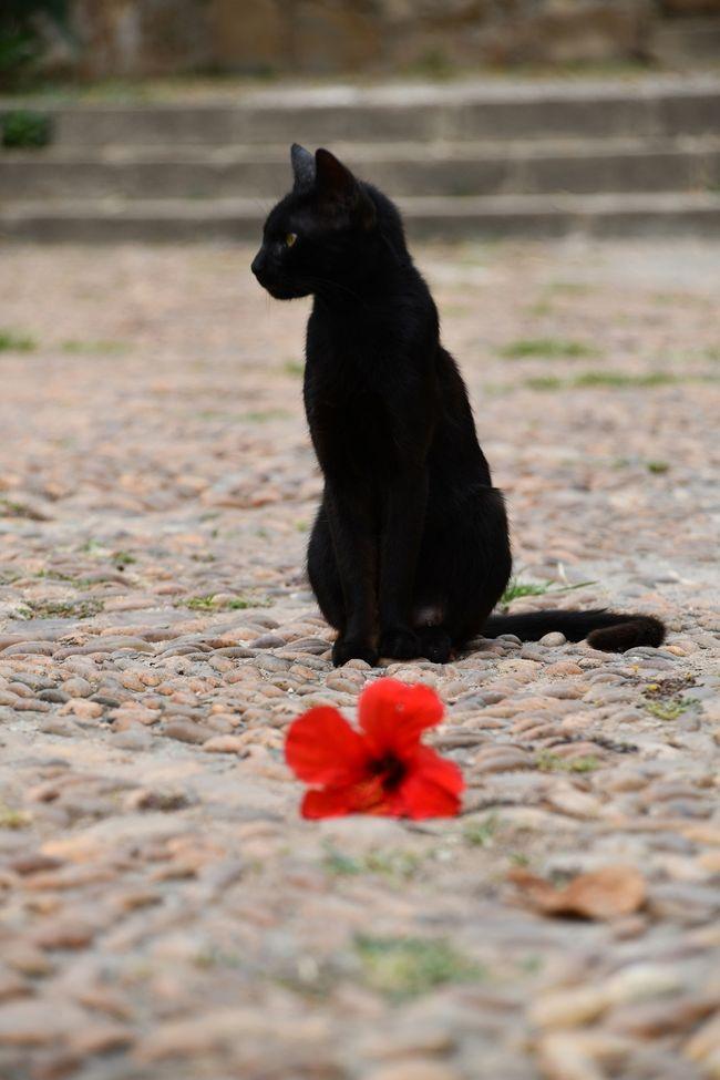 黒猫と赤い花。<br />タイトル「ブラック&amp;レッド」