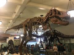 そのあとはパラパラ雨が降ってきたのとやっとオープンの時間になったので、アメリカ自然史博物館へ。 この恐竜にたどり着くのにめちゃめちゃ迷子になった~~~~~!! もう、ほんっとわかりにくいよ!アメリカの博物館&美術館!
