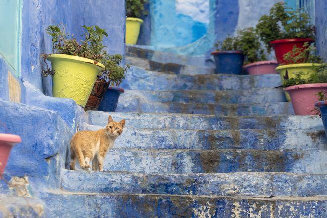 昼間は写真撮影で大混雑のフラワーポッドの場所も、朝早くは猫しかいません。