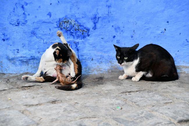 猫の出産シーンにも出会えました。