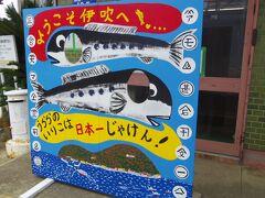 伊吹島のイリコは日本一!