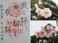 護国神社では御朱印を頂く事はしてないんですが、こちらの言葉の書かれた御朱印だけは欲しかったので、拝受させて頂きました  十月桜かな?まだ小さな木でしたが、ちょうど桜の花が咲いていました