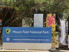 空港から1時間ほどで、マウントフィールド国立公園へ到着。  ここまで来るのに、 小さいカンガルーやらポッサムなどの動物が 沢山車にひかれていました。  道路は、郊外はガタガタな所も多く、 道路も左程広くないのに、速度は100キロで 走らなければならないとか! タスマニア島内は広いので、その位で走らないと 目的地につかないのだそう。  しかも、動物たちは夜行性、 日本のように街灯があるわけでもなく 世界で一番野生動物がひかれている場所なのだそう・・・    私は、運転が好きだし、 女性にしては、運転も上手い方だと思うのですが あの道路、(いわゆる田んぼの真ん中の農道のような幅) を100キロで走るのは、怖すぎます。 やっぱりガイドさんつけてよかったです。   観光客の方は景色を見ながら、 レンタカーでドライブという印象があるそうですが とんでもなくて、そういう車は、 ものすごくあおられるそうです。   確かに、追い越し車線もなく 普通に生活する人たちにとって のんびり走る車が沢山あったら、 大変ですね。  普段の生活で、毎度毎度前に 農業のトラクターが走っているような ものかもしれません。