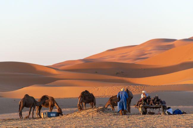 「AUBERGE TOMBOUCTOU」<br />砂漠のホテルに宿泊です。<br />到着後、皆さん長時間移動で部屋でゆっくりの時間ですが、夕暮れのサハラ砂漠を撮影しないなんてもったいないです!<br />夕暮れにラクダのケアをするベルベル人たち。<br />フレンドリーです!