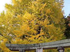 次に訪れたのは筒賀の大イチョウ。 筒賀大歳神社の境内にあります。 以前私達が訪れた時は青葉でしたが、今回は黄色くなってました♪ ここでも構図を教えて下さるMechaGodzillaⅢ&703さん。  これはMechaGodzillaⅢ&703さんが撮影されたお写真です。