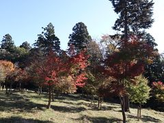 このあたりが紅葉の郷の中心、もみじ山の広場。